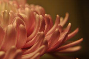 floral-1792171_960_720