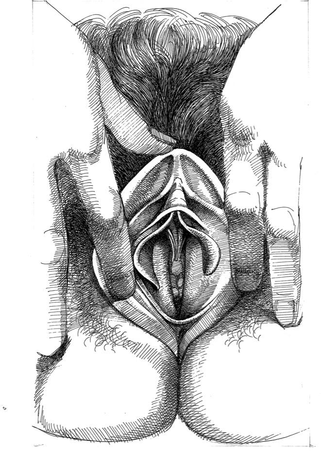 Vulva_4