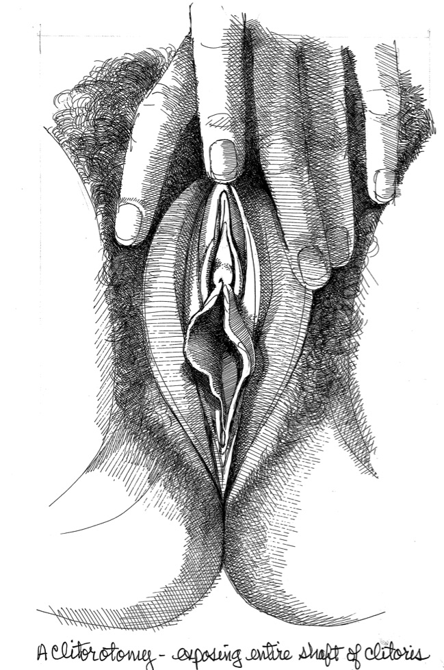 Vulva_8